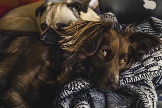 puppy-love_4460x4460